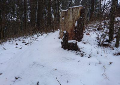 skruzdeles ziema