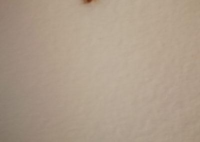 tarakonas nimfa